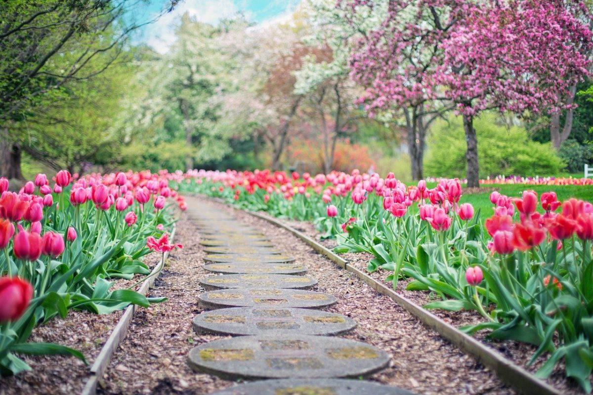 Ładny oraz czysty ogród to zasługa wielu godzin spędzonych  w jego zaciszu podczas pielegnacji.